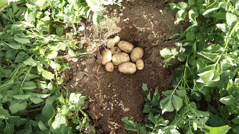 Comunicare il valore del lavoro agricolo e dei suoi prodotti